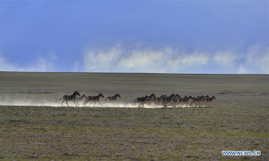 Paisagens da Região Autônoma do Tibete