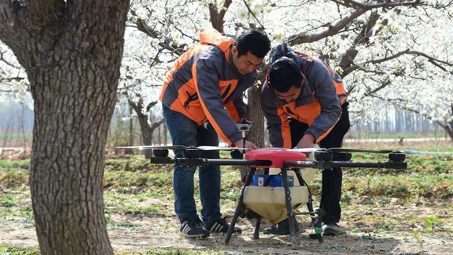 Drones usados para polinização no norte da China